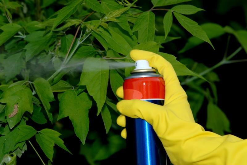 Razresheno-ispolzovanie-pestitsidov-v-selskohozyajstvennyh-tselyah.jpg