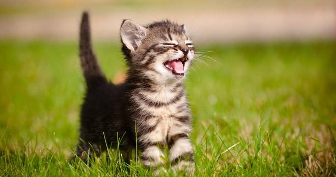 кошки франция, животные на прокат