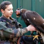 Во Франции тренируют пернатый спецназ