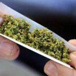 1,3 тонны марихуаны