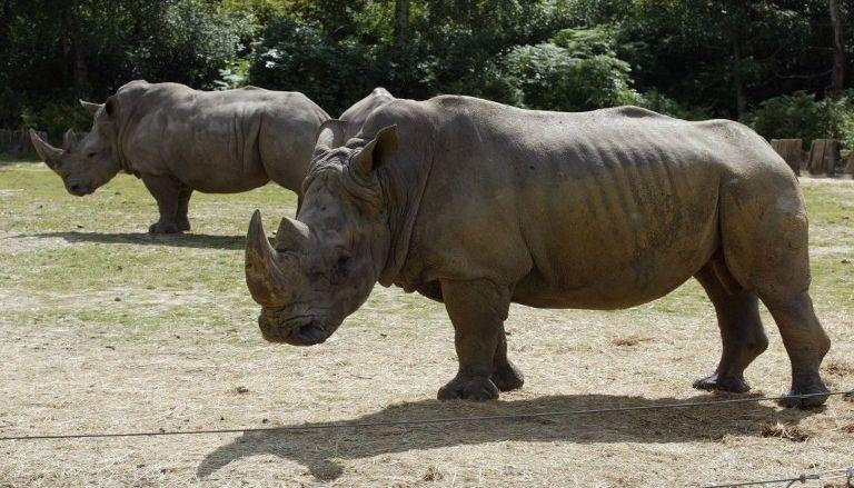 Новости Франции - Убийство носорога в сафари парке под Парижем