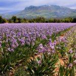 прованс, весна в провансе