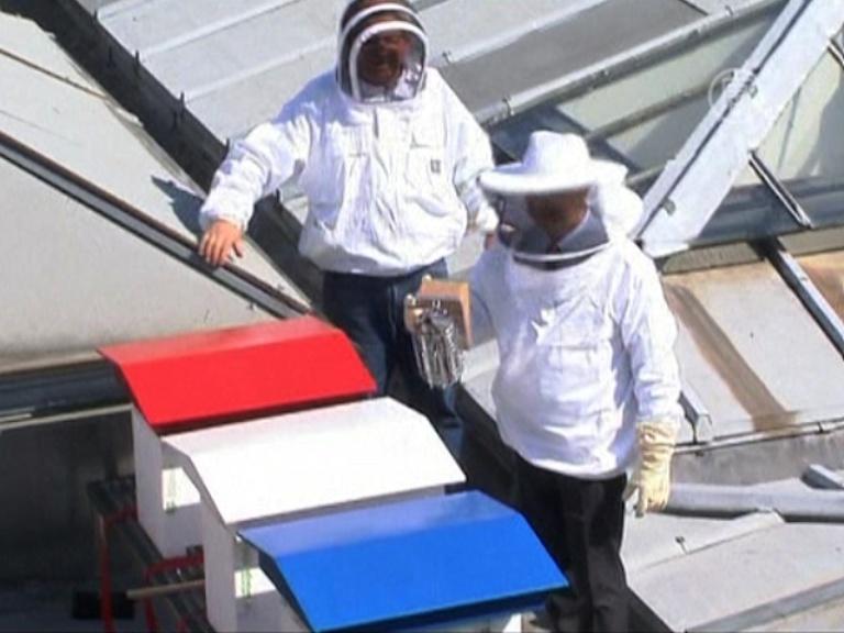 В Париже пчёлы