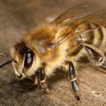 В Париже пчёлы едва не сорвали съёмки фильма «Миссия невыполнима»