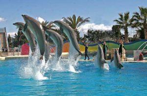 дельфины маринленд
