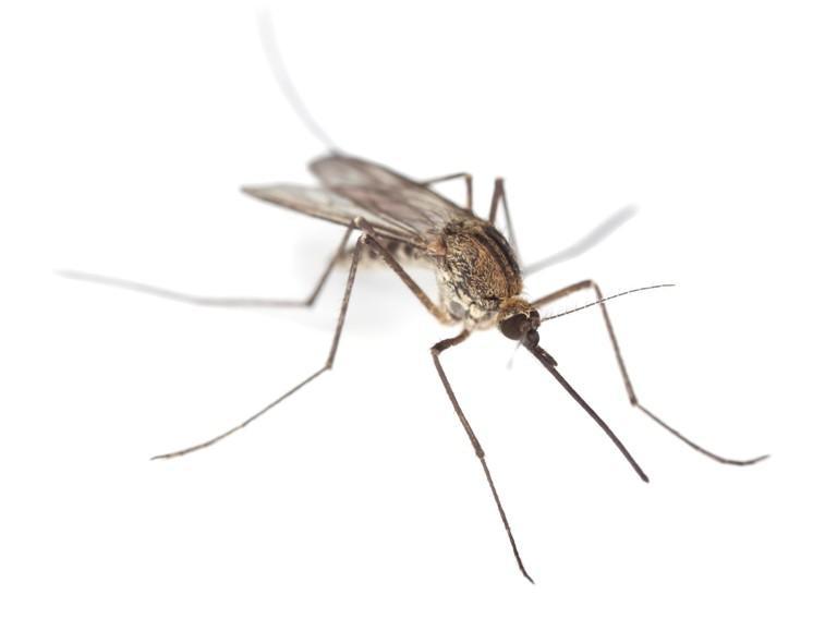komary-vy-ne-pravy_120338046_orig_.jpg