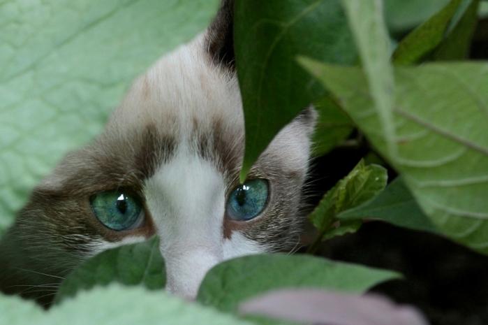 На юге Франции объявился серийный убийца кошек