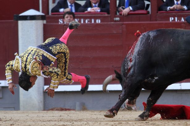 Spanish-matador-Ivan-Fandino-is-gored-by-a-bull.jpg