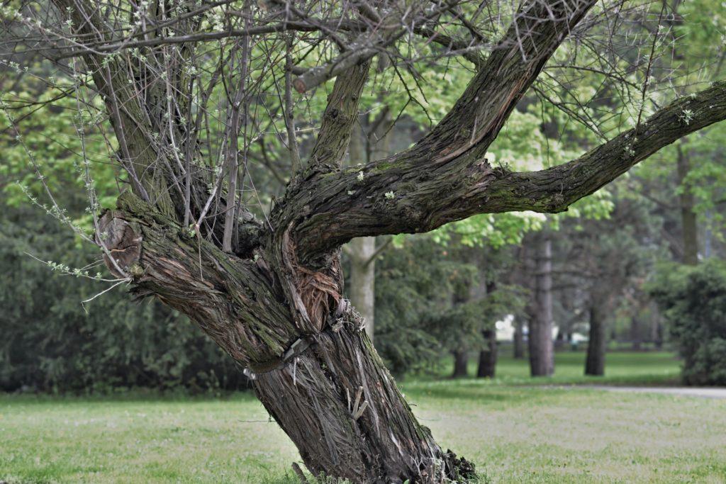 stary-strom-1024x683.jpg