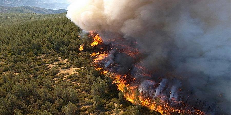 Двух подростков будут судить за поджог леса на юге Франции