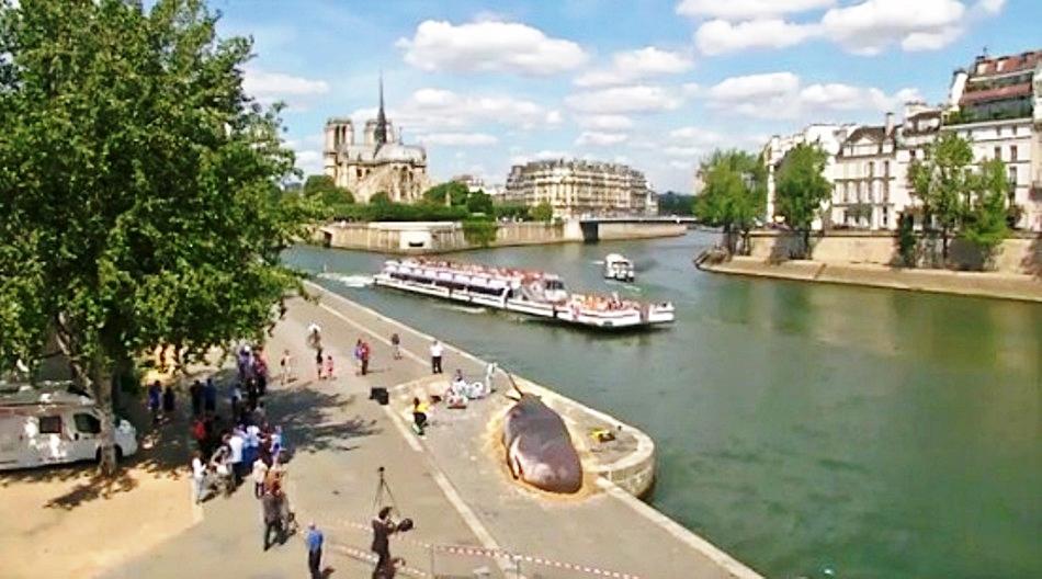 Кашалот выбросился на берег Сены в Париже