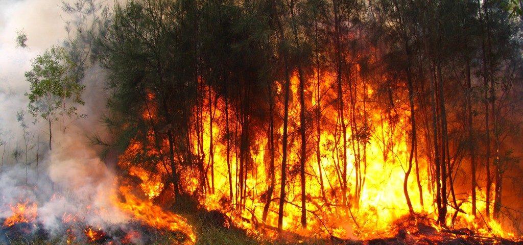 bush-fire-break-1024x480-1024x480.jpg