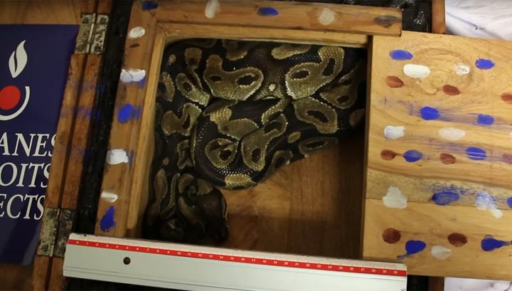 В багаже пассажира нашли экзотическую рептилию