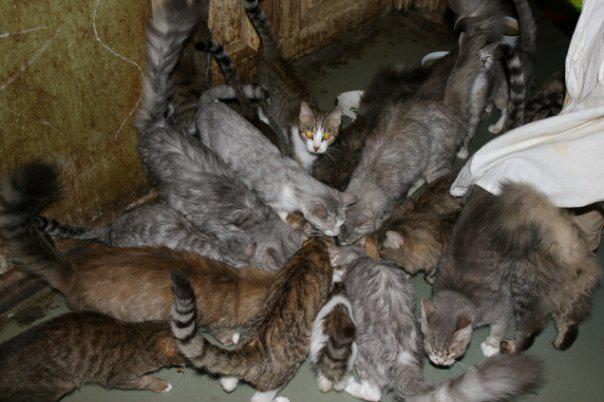 Обнаружены 130 кошек в однокомнатной квартире в Париже