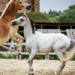 конное шоу, франция
