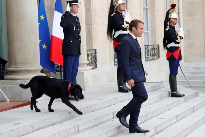 Пес президента Франции нарушил протокол