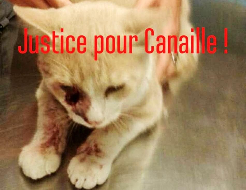 Canaille.jpg