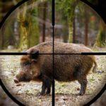 На юге Франции охотник принял пенсионера за кабана