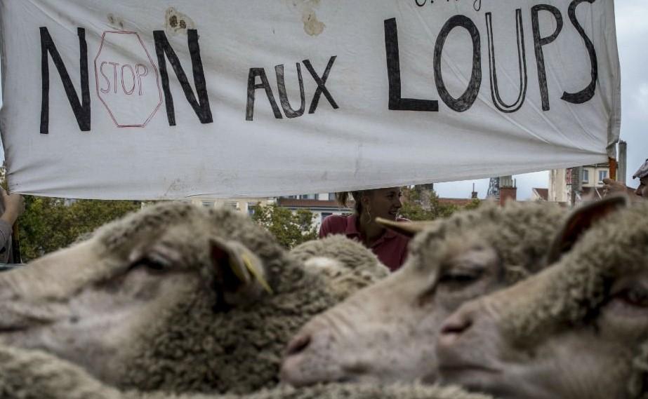 Фермеры вывели тысячу овец нацентральную площадь французского Лиона