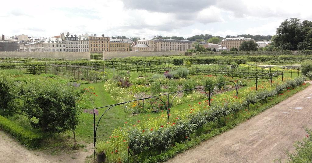 1200px-Potager_du_roi_Ch-teau_de_Versailles-1024x537.jpg