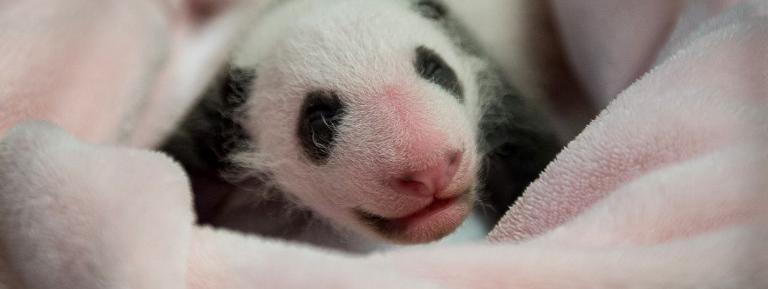 Брижит Макрон примет участие в крещении панды