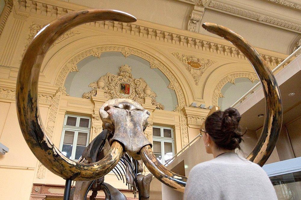 Бизнесмен из Страсбурга купил скелет мамонта из Сибири