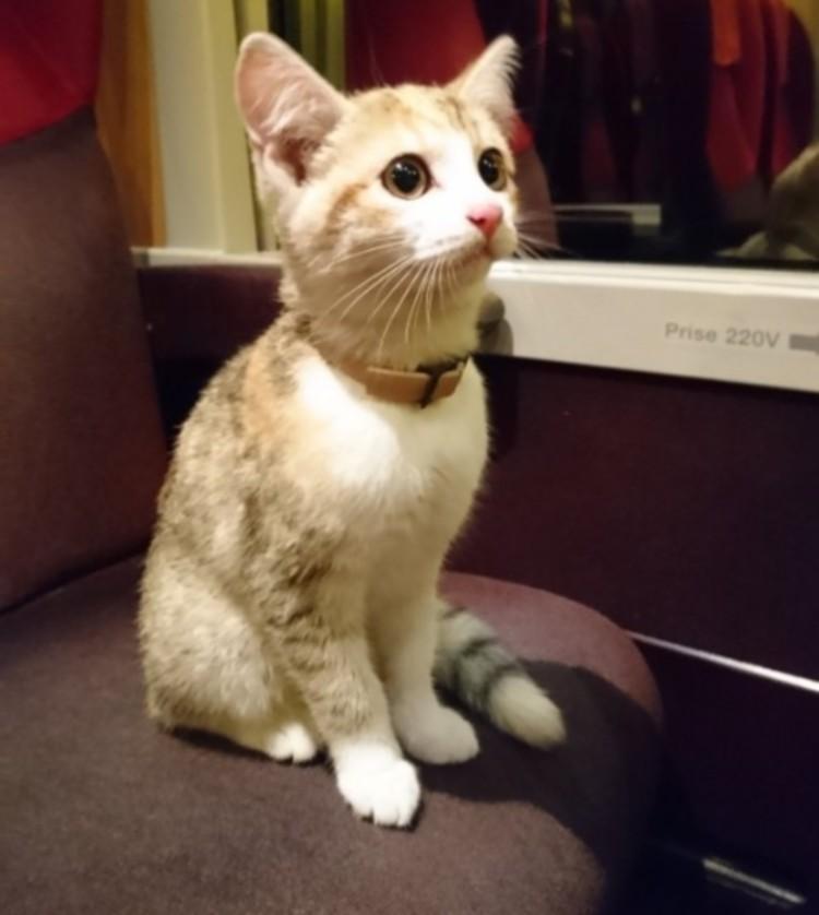 Настырный котёнок на поезде вернулся к хозяевам