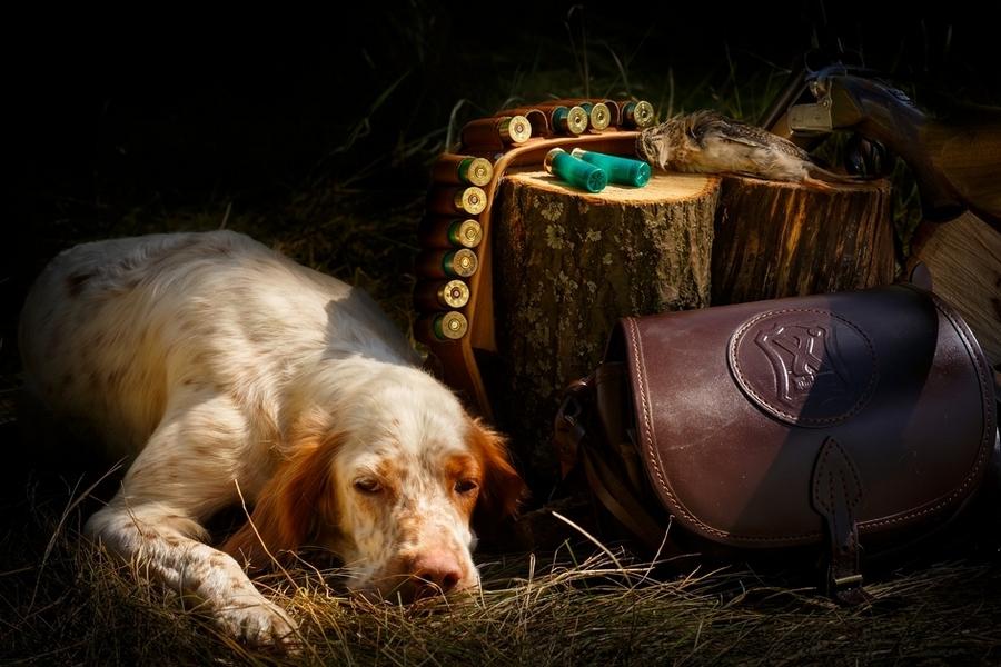 Во Франции хотят запретить псовую охоту