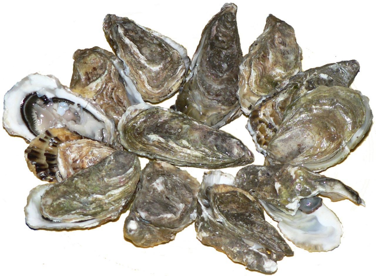 Pacific_oysters_01-1280x938.jpg