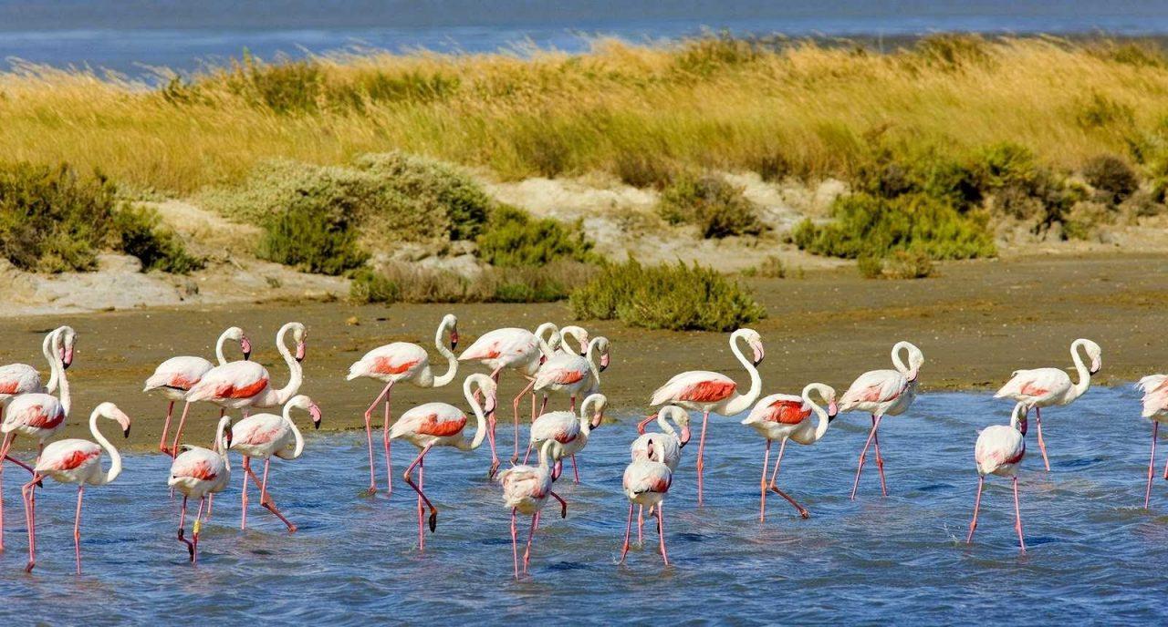 11_flamingos-parc-regional-de-camargue-provence-france-1280x688.jpg