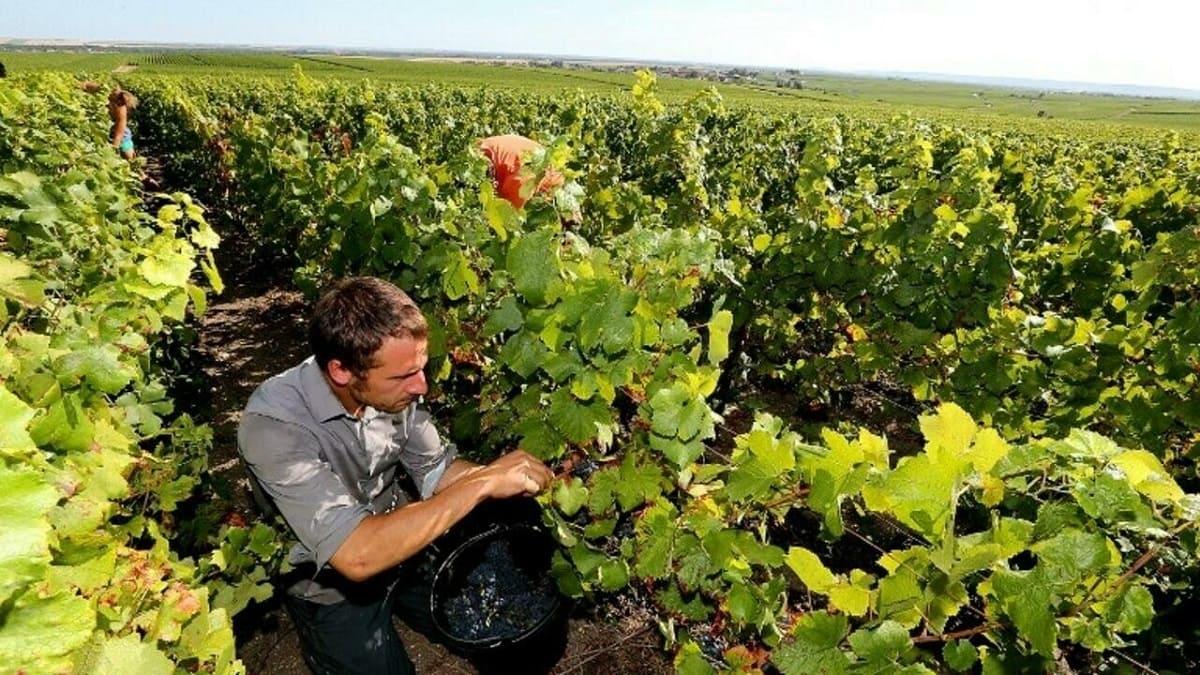 vin-france-2021.jpg
